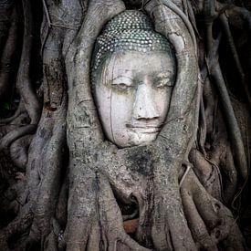 Boeddha hoofd in boom van Tessa Louwerens