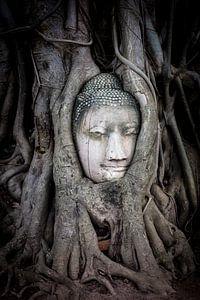 Boeddha hoofd in boom