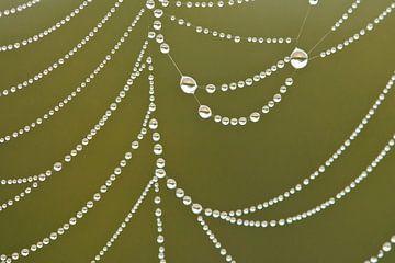 Dauwdruppels in spinnenweb sur