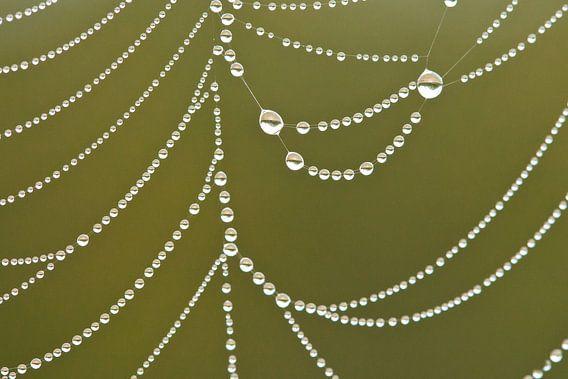 Dauwdruppels in spinnenweb van Caroline Piek