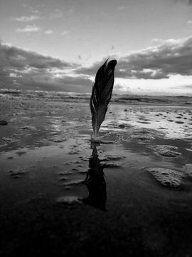 Veer in het water sur Toekie -Art