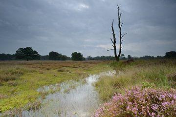 Threatening sky above the blooming heather.  sur Gonnie van de Schans