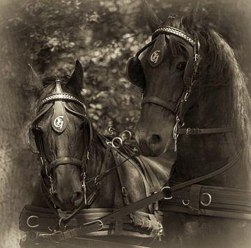 Friese Paarden von Ada Zyborowicz