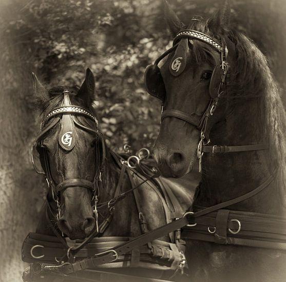 Friese Paarden van Ada Zyborowicz