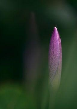 Der Frühling ankommen von Marloes van Pareren