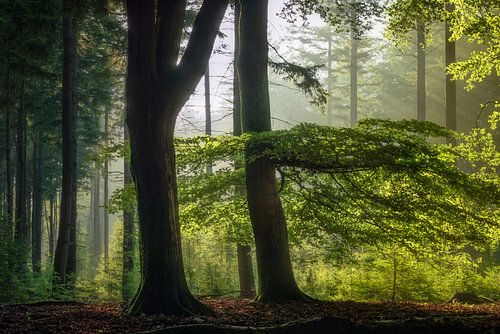 Dubbelzinnig - Prachtig bos in de morgen