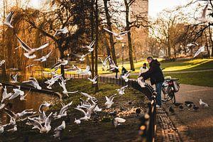Meeuwen in Kronerburgerpark, Nijmegen van Wouter Loeve