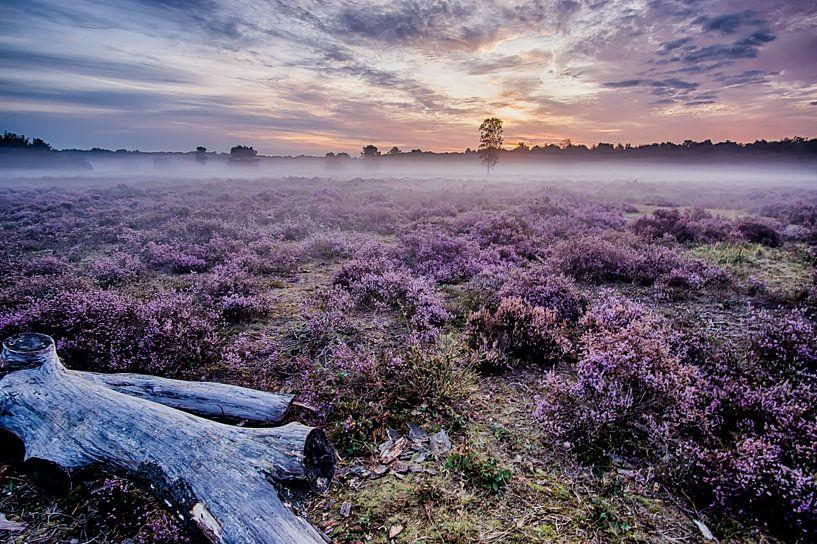 Prachtige paarse heide van Joran Quinten