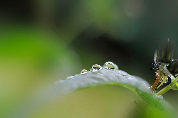 Droplets van Martine Affre Eisenlohr