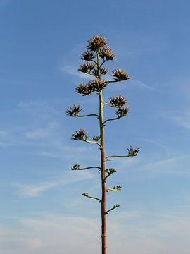Tree von Helen Bouma