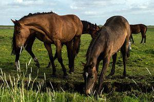 Paarden in de wei 3