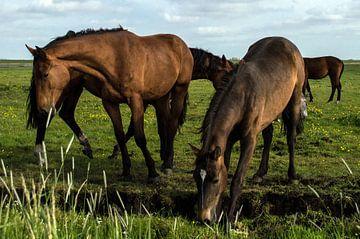 Paarden in de wei 3 van Brian Morgan