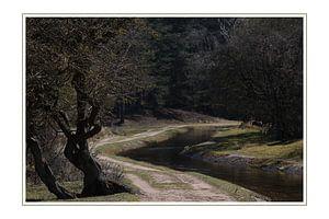 Het pad in het bos