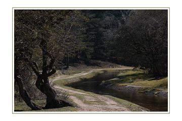 Het pad in het bos van Annemiek van Eeden