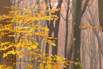 Découvre dans une forêt de hêtres pendant un matin brumeux. sur Sjoerd van der Wal