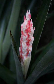 Cactus met bloem van Anne van de Beek