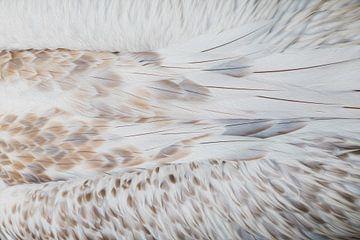 Verenpracht | Veren van een pelikaan van Marjolijn Maljaars
