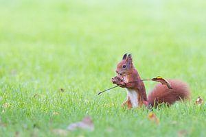 eekhoorntje met vlag van