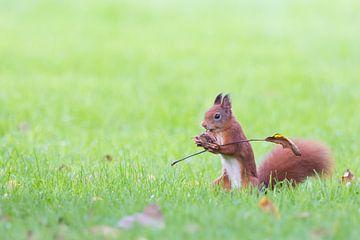 eekhoorntje met vlag von Kris Hermans