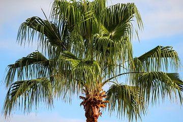 Toppen van een palmboom op Tenerife van Reiner Conrad
