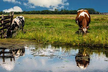 Niederländische Kühe von Brian Morgan