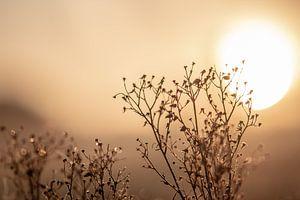 trockene Pflanze in der Sonne