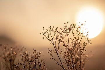 plante sèche au soleil sur Tania Perneel