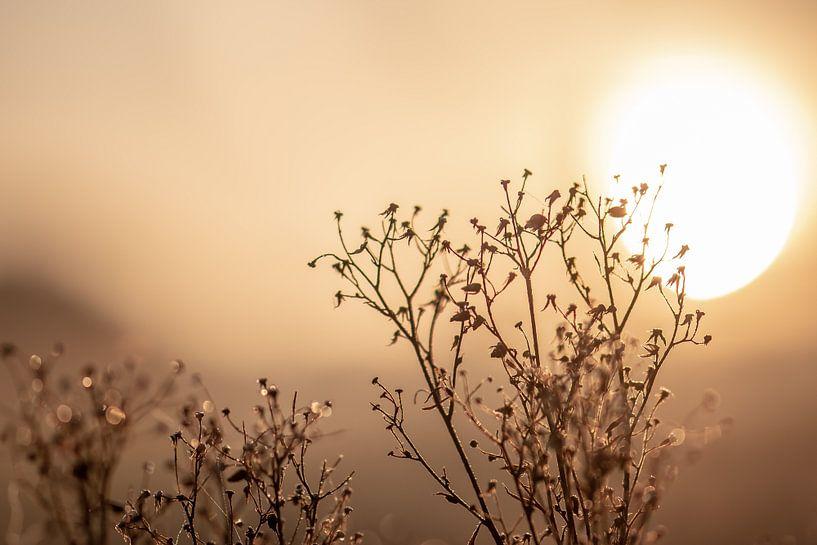 trockene Pflanze in der Sonne von Tania Perneel