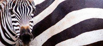 Große und kleine Streifen von Sharing Wildlife
