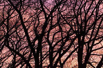 Bomen-silhouet van Klaartje Majoor