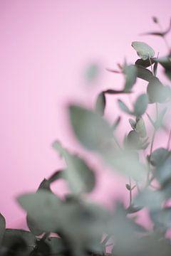 Eucalyptus tak met wazig detail, gefotografeerd op een roze achtergrond van DeedyLicious