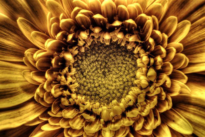 Gouden Sunburst van Mike Bing