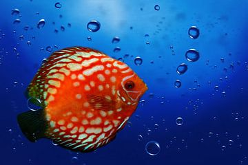 Unterwasserwelt 1 van Heike Hultsch