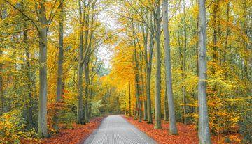 Herfst op Texel. van Justin Sinner Pictures ( Fotograaf op Texel)