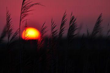 Coucher de soleil sur Rogier Vermeulen
