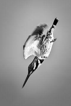 Bonte IJsvogel van Frans Lemmens