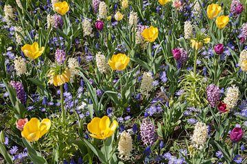 Abwechslungsreiche farbige Blumen von Maurice de vries