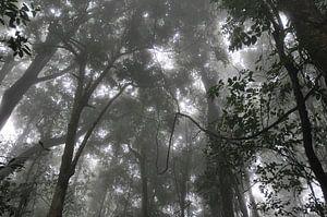 Rainforest von Diederik De Reuse