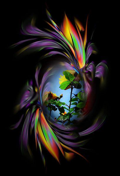 Fantasie in bloei - Rozen van Walter Zettl