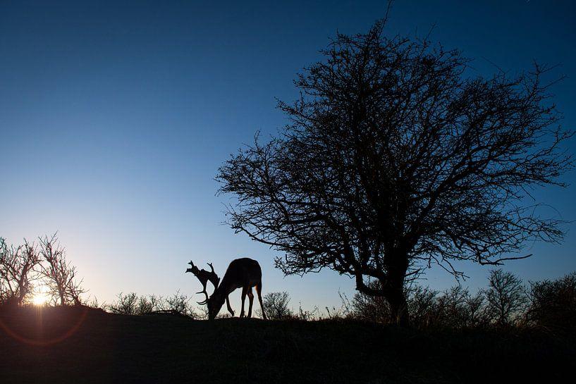 Damhert bij avond van Andy van der Steen - Fotografie