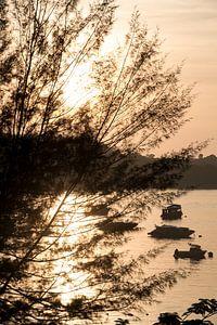 Vroege vogel, voor een vroege zonsopgang. van