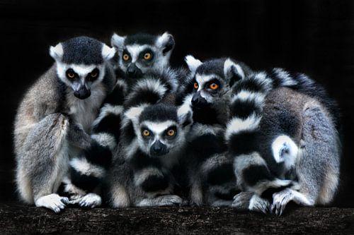 Die Katta-Gang von Joachim G. Pinkawa