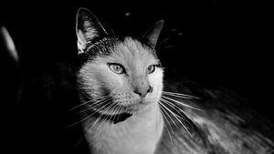 Schwarze und weiße Katze