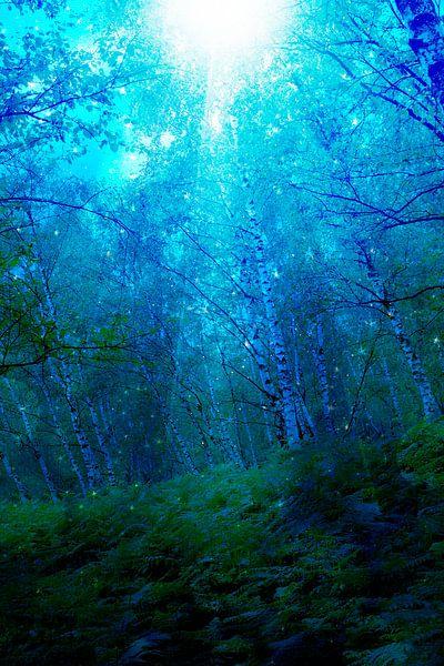 Mysterieus licht in nachtelijk bos van Carin Klabbers