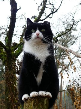Zwarte kat op een paaltje van Petra Dielman