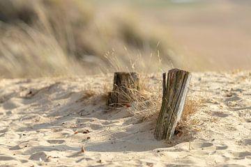 Hölzer im Sand von Kirsten Warner