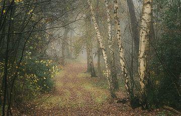 Bospad in mistig herfstbos met berkenbomen van Peter Bolman
