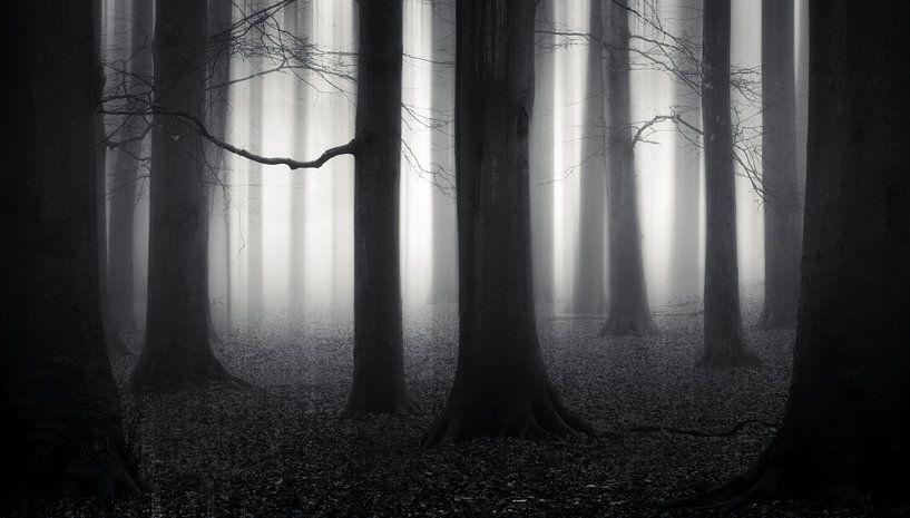 Step into the Paranormal von Daniel Laan