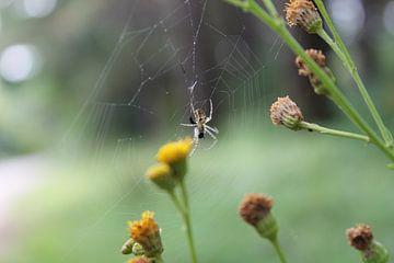 Spider van Ruben Honders