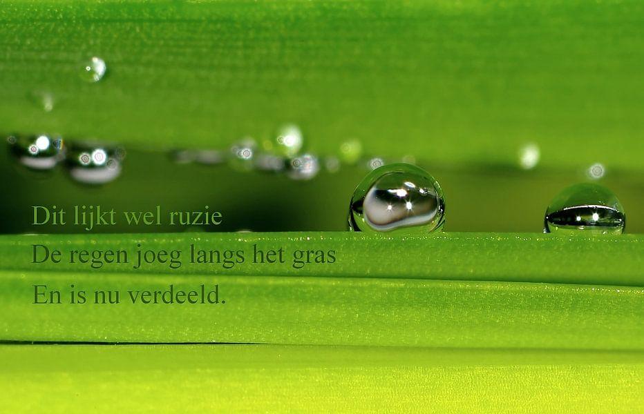 Langs het gras